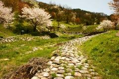 Bosque del flor de cereza Fotos de archivo libres de regalías