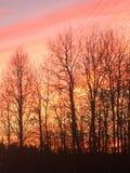 Bosque del fuego fotos de archivo