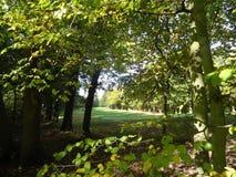 Bosque del golf fotos de archivo