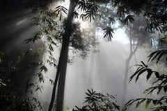 Bosque del haz de Sun Fotos de archivo