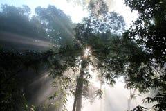 Bosque del haz de Sun Foto de archivo libre de regalías