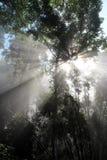 Bosque del haz de Sun Imágenes de archivo libres de regalías