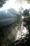 Bosque del haz de Sun Fotografía de archivo