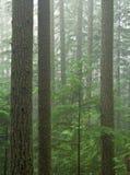 Bosque del Hemlock Fotografía de archivo