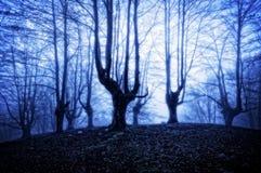 Bosque del horror en la noche Fotos de archivo libres de regalías