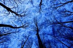 Bosque del horror en la noche fotografía de archivo