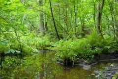 Bosque del humedal del verano Imagen de archivo libre de regalías