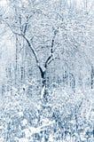 Bosque del invierno Foto de archivo