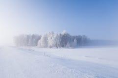 Bosque del invierno Imágenes de archivo libres de regalías