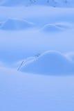 Bosque del invierno Imagen de archivo libre de regalías
