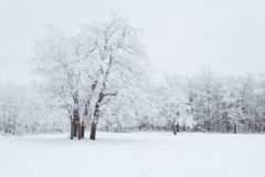 Bosque del invierno Fotos de archivo