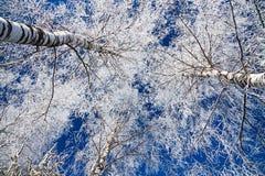 Bosque del invierno Imagen de archivo