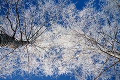 Bosque del invierno Fotografía de archivo