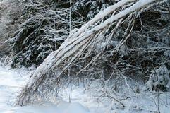 Bosque del invierno. Imagen de archivo libre de regalías