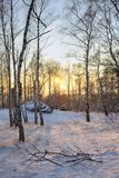Bosque del invierno Foto de archivo libre de regalías
