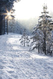 Bosque del invierno Fotografía de archivo libre de regalías