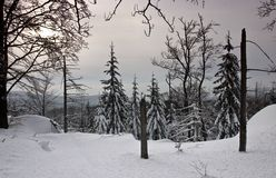 Bosque del invierno (aún vida) Foto de archivo libre de regalías