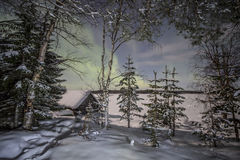 Bosque del invierno bajo luces del aurora borealis Fotografía de archivo libre de regalías