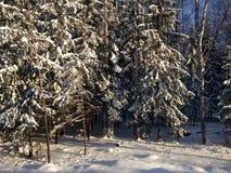 Bosque del invierno cerca de Moscú, Rusia Foto de archivo libre de regalías