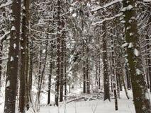 Bosque del invierno cerca de Moscú, Rusia Fotografía de archivo libre de regalías