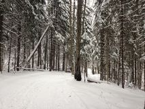 Bosque del invierno cerca de Moscú, Rusia Fotos de archivo libres de regalías