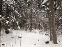 Bosque del invierno cerca de Moscú, Rusia Imágenes de archivo libres de regalías