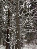 Bosque del invierno cerca de Moscú, Rusia Foto de archivo