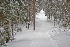 Bosque del invierno. Colina Foto de archivo libre de regalías