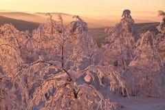 Bosque del invierno con la iluminación de la puesta del sol Imagen de archivo libre de regalías