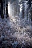 Bosque del invierno con la luz hermosa imagen de archivo