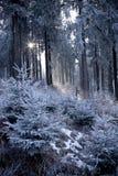 Bosque del invierno con la luz hermosa fotos de archivo
