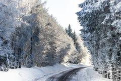Bosque del invierno con la opinión majestuosa de los árboles congelados Invierno en naturaleza Imagenes de archivo