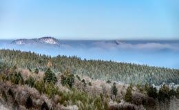 Bosque del invierno con la opinión majestuosa de los árboles congelados Invierno en naturaleza Fotos de archivo libres de regalías