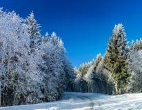 Bosque del invierno con la opinión majestuosa de los árboles congelados Invierno en naturaleza Escena hivernal pintoresca y magní Imagen de archivo libre de regalías
