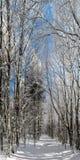 Bosque del invierno con la opinión majestuosa de los árboles congelados Invierno en naturaleza Escena hivernal pintoresca y magní Imagen de archivo