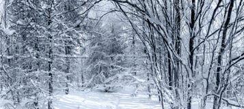 Bosque del invierno con la opinión majestuosa de los árboles congelados Invierno en naturaleza Escena hivernal pintoresca y magní Imagenes de archivo