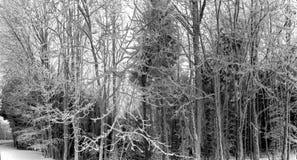 Bosque del invierno con la opinión majestuosa de los árboles congelados Invierno en naturaleza Escena hivernal pintoresca y magní Fotos de archivo libres de regalías