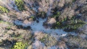 Bosque del invierno con la trayectoria nevosa, tiro aéreo metrajes