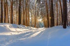 Bosque del invierno con las trayectorias en la nieve Imágenes de archivo libres de regalías