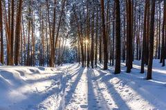 Bosque del invierno con las trayectorias en la nieve Fotos de archivo