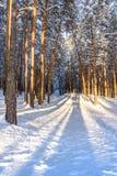Bosque del invierno con las trayectorias en la nieve Fotos de archivo libres de regalías
