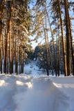 Bosque del invierno con las trayectorias en la nieve Imagenes de archivo