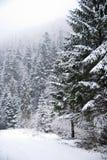 Bosque del invierno con los árboles y las nevadas nevados Foto de archivo libre de regalías