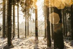Bosque del invierno con los puntos de Lense Imágenes de archivo libres de regalías