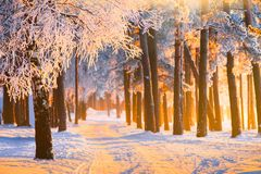 Bosque del invierno con luz del sol mágica Paisaje con el bosque escarchado del invierno el mañana de la Navidad imagen de archivo