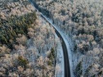Bosque del invierno con un camino en una mañana soleada fría fotografía de archivo