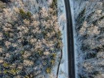 Bosque del invierno con un camino en una mañana soleada fría imágenes de archivo libres de regalías