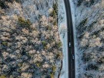 Bosque del invierno con un camino en una mañana soleada fría foto de archivo
