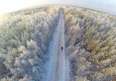 Bosque del invierno con una vista panorámica Fotos de archivo libres de regalías