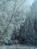 Bosque del invierno cubierto con helada en el fondo Fotografía de archivo
